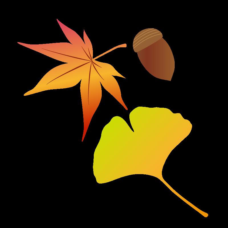 秋ですね~🍂